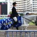 写真: 川崎競馬の誘導馬05月開催 こいのぼり青Ver-120514-16-large