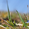 Photos: フグリの生け花
