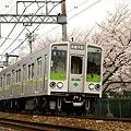 地下鉄車両と桜