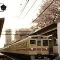 桜のトンネルを駆け抜ける9000系+6000系準特急