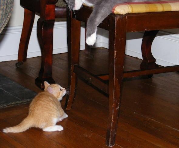 kitten1035_04