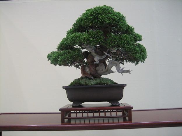 日本園芸フェスティバル 盆栽