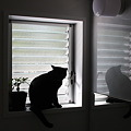 黒猫タキシード党