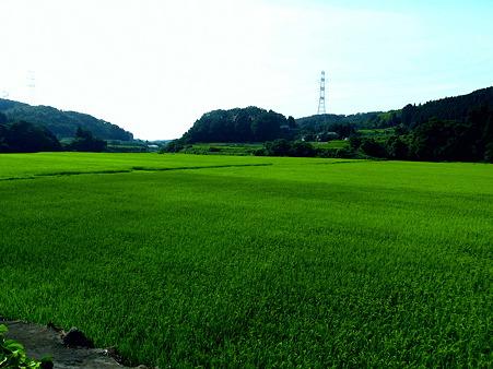 夫の実家の田んぼ^^   緑の絨毯