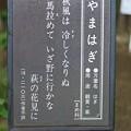 山萩(ヤマハギ)