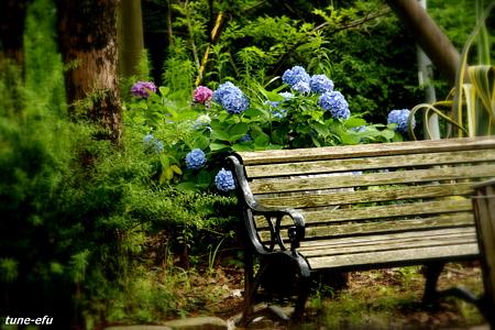 紫陽花のあるベンチ