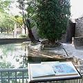 写真: 20100601 江戸川 02
