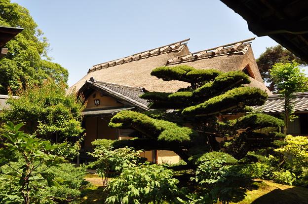 写真: 慈光院の中庭