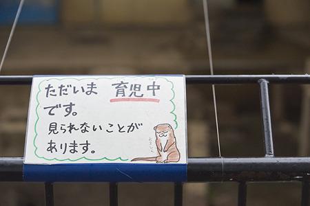ichikawa110501001