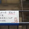 写真: ichikawa110501001