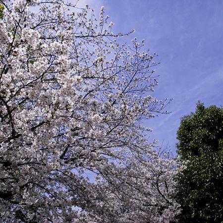 大阪城公園、春の日01