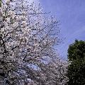 Photos: 大阪城公園、春の日01