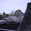 Photos: 大阪城公園、春の日05