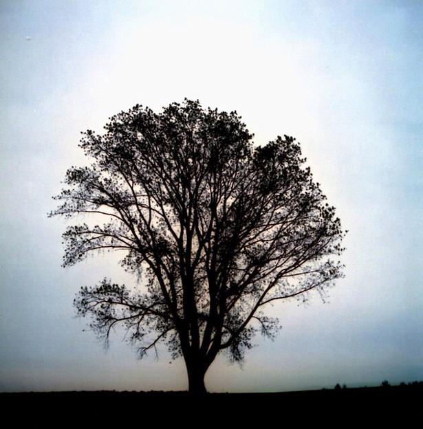 フィルム哲学の木