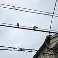 写真: 20100618_tubame2