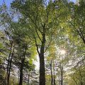 森林浴の森