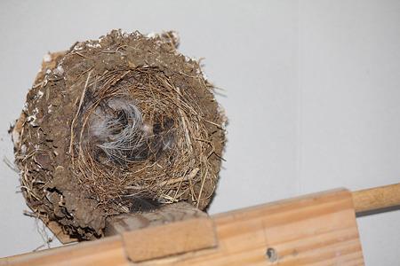 下ろした巣