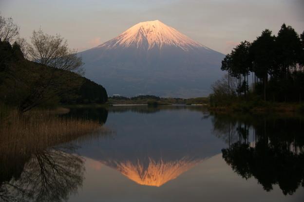 富士(田貫湖)2