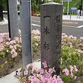 写真: 一本杉 / 保春院前丁 【宮城県仙台市若林区】
