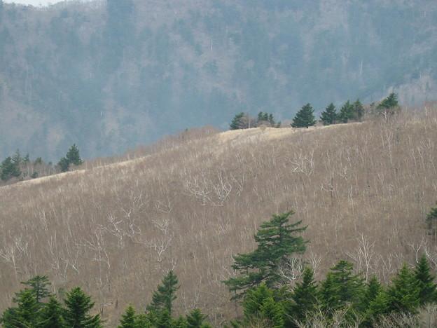 写真: 八方ヶ原の景色
