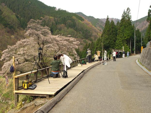 朝の「駒つなぎの桜」の撮影風景