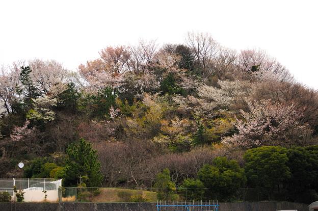 写真: 20100328_160858