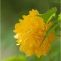 写真: お花くす玉♪・・・。