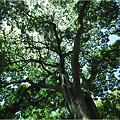 Photos: 大きな木の下で・・・。