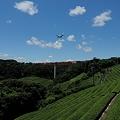 茶畑と飛行機