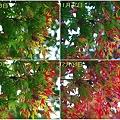 1-抜け殻と紅葉の変化