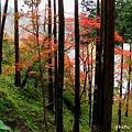 Photos: 長谷の紅葉9
