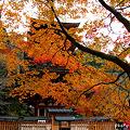 Photos: 五重塔1