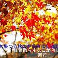Photos: 秋のかたみに