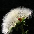 Photos: angel flower2