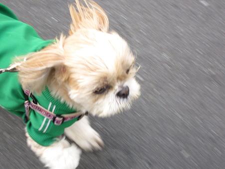 風が強っ!
