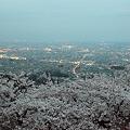 Photos: 夜桜鑑賞