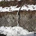 Photos: 2月17日「吐き出す氷」