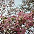 写真: 穏やかな春