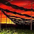 -茶畑の夕景-