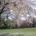 Photos: 伊達 館山公園 桜 10.5.21