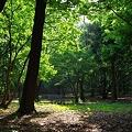 woods morning