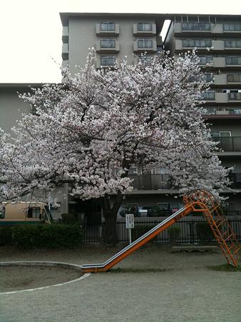 桜2010_08