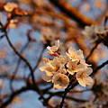 春のココロモチ