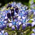 Photos: エキゾチックなブルー♪