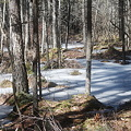 Photos: White Water in the Woods