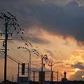 鳥の景色 (4) 2010年 9月