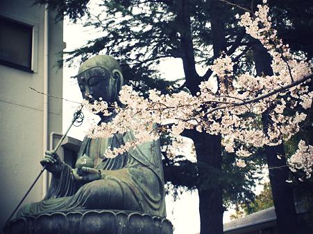 品川寺の大仏と桜