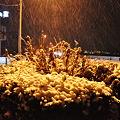 写真: 110214 雪の坂ノ下ローソン前