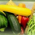 Photos: 本日のお野菜