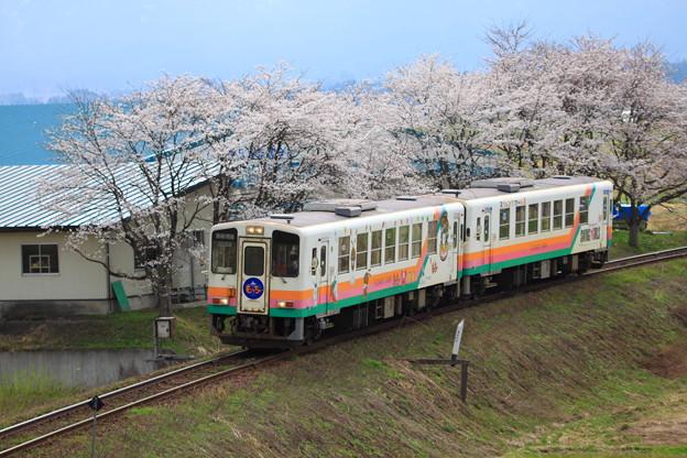 山形鉄道 テッパンの桜と鉄の風景写真